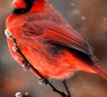 Cardinal in a Snowstorm Sticker