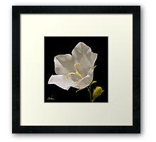 A white flower for a wedding ! Framed Print