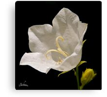 A white flower for a wedding ! Canvas Print