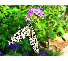 Afternoon Butterfly Photographic Print