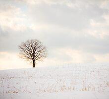 Winter by jenndiguglielmo