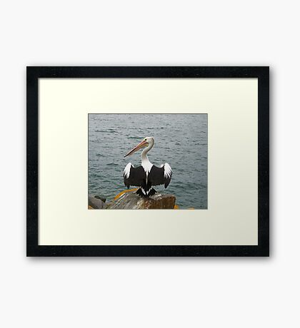 A Pelican at Pelican, NSW Framed Print