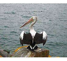 A Pelican at Pelican, NSW Photographic Print