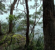 Banksia Point, New England National Park by Kitsmumma