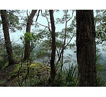 Banksia Point, New England National Park Photographic Print