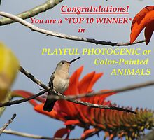 Top 10 Banner-Playful Photogenic Animals by hummingbirds