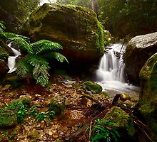 Fern Valley. by Warren  Patten