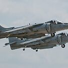 Harriers Times Two by gfydad
