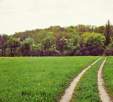 road through the meadow by UB-001
