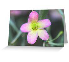 Eremophila platycalyx Greeting Card