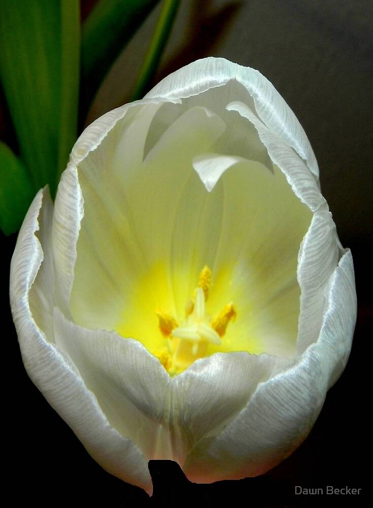 Pure beauty ©  by Dawn M. Becker