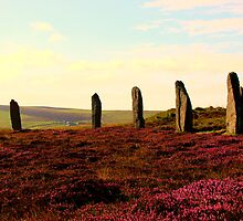 Stones In Heather by Jessica Grunewald