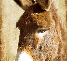 Just a Donkey by Sophie Lapsley