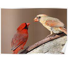 Northern Cardinals Poster