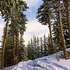 Tree Skiing by Ryan Davison Crisp