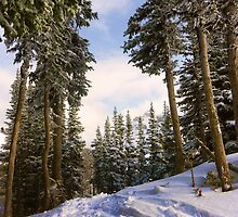 Tree Skiing by Ryan Davison Crisp