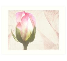 One Perfect Rose...... Art Print