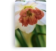 Salmon Trumpeted Narcissus Canvas Print