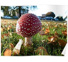 Red Bubble Fungi Poster