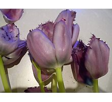 """""""Tulips"""" Photographic Print"""
