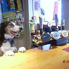 The Canine Barman by Steven Mace