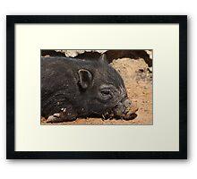 Black Pig 2794 Framed Print
