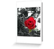 Miniature Rose Bud - Mother's Day Greeting Card