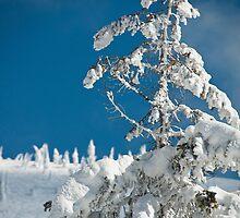 Frozen trees by Kalpesh Patel