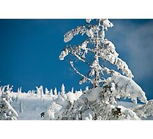 Frozen trees Photographic Print