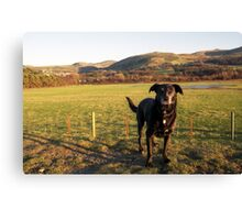 Shela in Llanfairfechan. Canvas Print