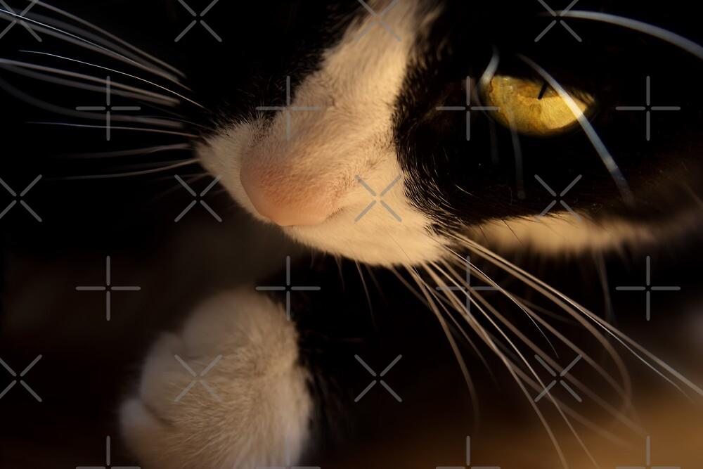 miss curiosity by Ingrid Beddoes