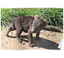 Hyena cub 2 Poster