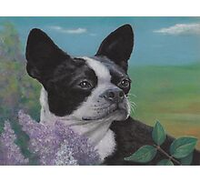 Lady in the Lilacs Photographic Print