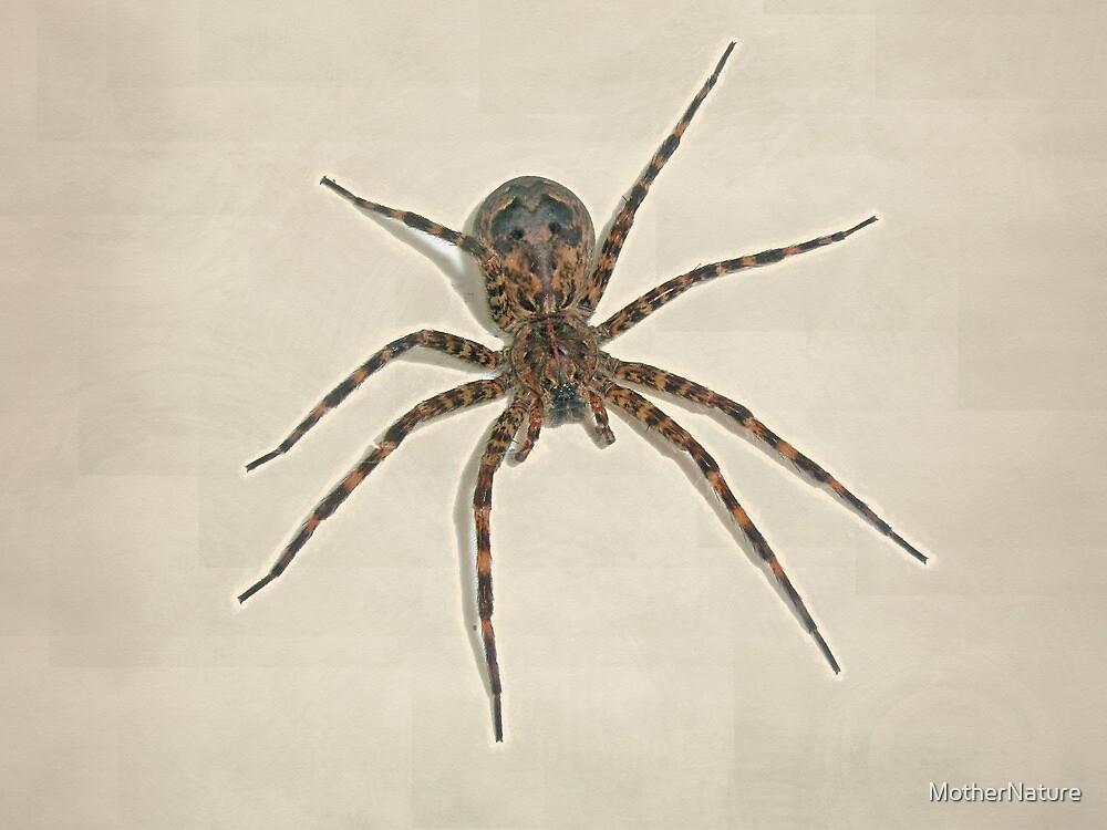Fishing spider - Dolomedes tenebrosus by MotherNature