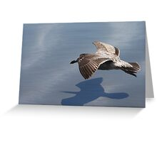 Low Flying Seagull on Doran Beach Greeting Card