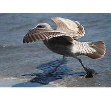 Seagull Walking on Doran Beach Photographic Print