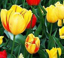 Tulip Patch by Nadya Johnson