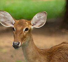 close up by Sajeev Chandrasekhara Pillai