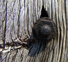 Rusty bolt in wood by Hans Bax