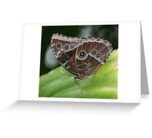 Common Morpho Butterfly Greeting Card