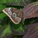 Illusive Butterfly by Karen K Smith