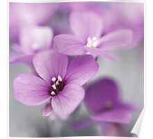 Pink Flowers...*1* Poster
