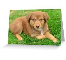 Red Tri Australian Shepherd Puppy - Aussie Greeting Card
