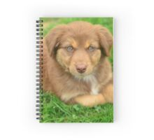 Red Tri Australian Shepherd Puppy - Aussie Spiral Notebook