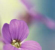 Pink Flowers...*3* by Bob Daalder