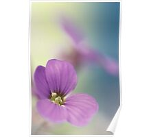 Pink Flowers...*3* Poster