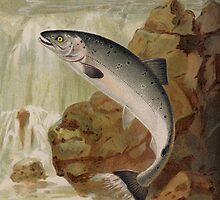 The Salmon leapt into the air. [after P J Smit.] by albutross