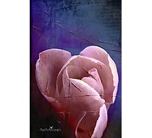 Painted tulip Photographic Print