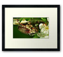 May-Bug Framed Print