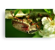 May-Bug Canvas Print